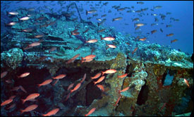 fish and the USS Monitor wreck.