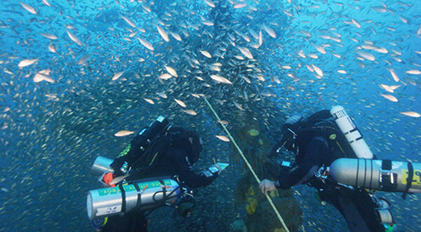Divers examen a shipwreck while surround by fish